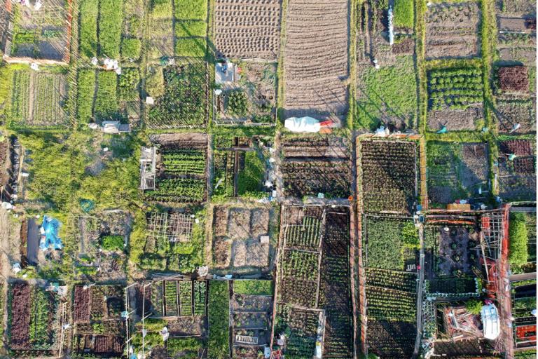 Faire pousser nos quartiers ! Appel à projets agriculture urbaine